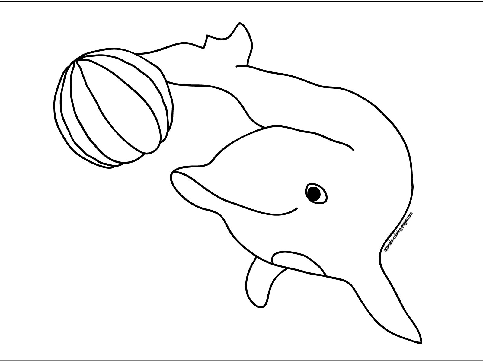 pictures of dolphins to color free printable pictures of dolphins download free clip dolphins color of to pictures
