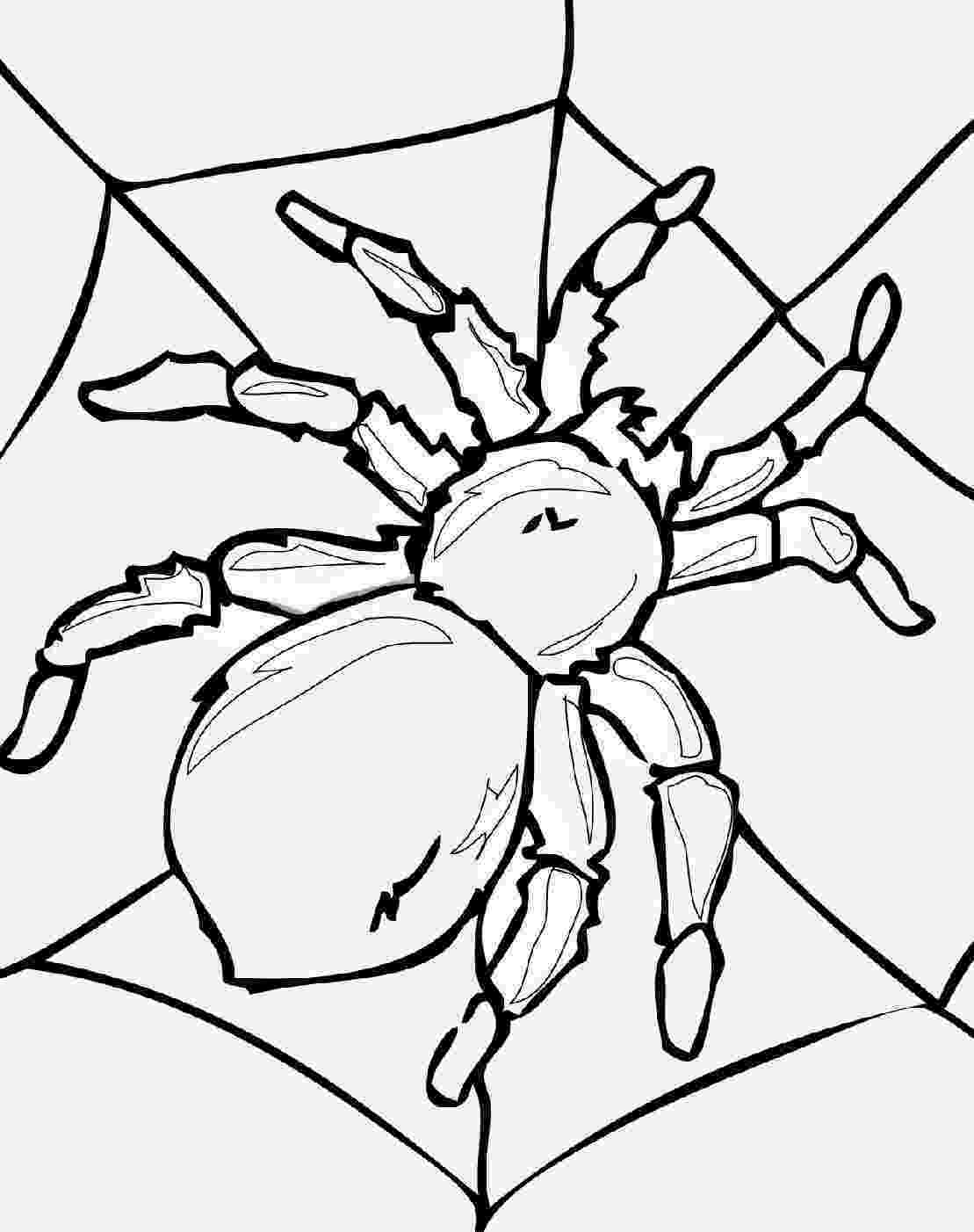 pictures of insects to color bug coloring pages surfnetkids to pictures color insects of