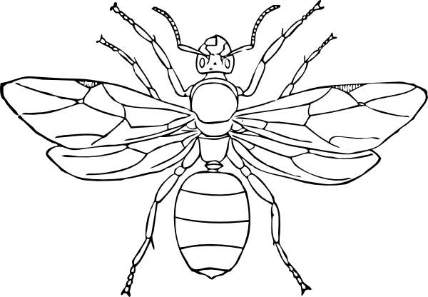 pictures of insects to color bugs and insects coloring pages insect coloring pages to pictures of insects color