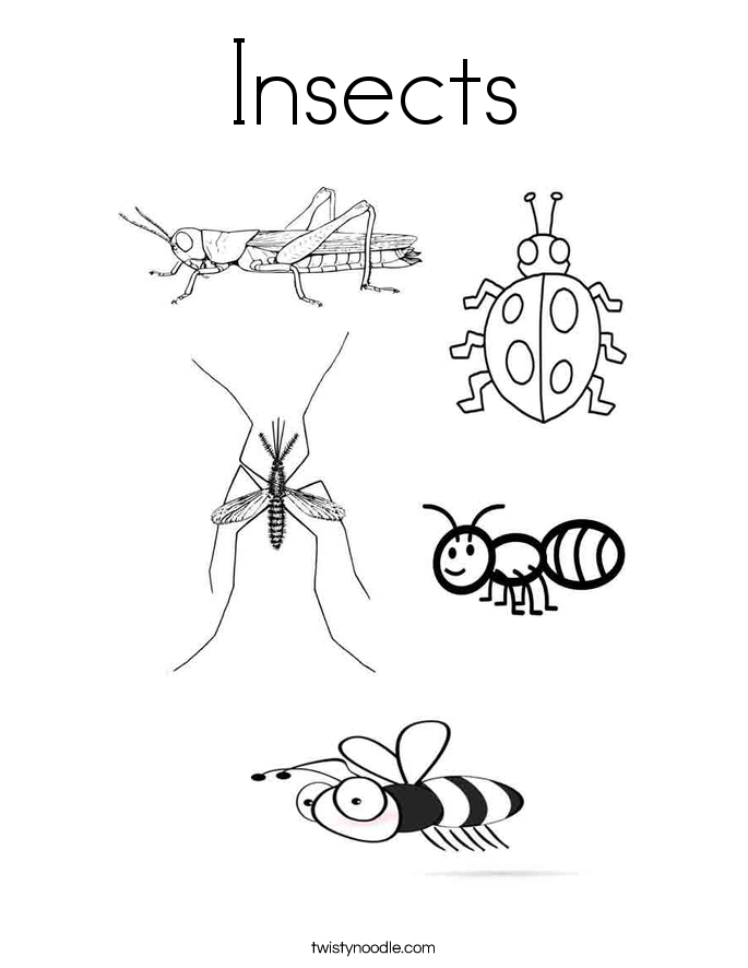 pictures of insects to color insect coloring pages best coloring pages for kids pictures to color insects of