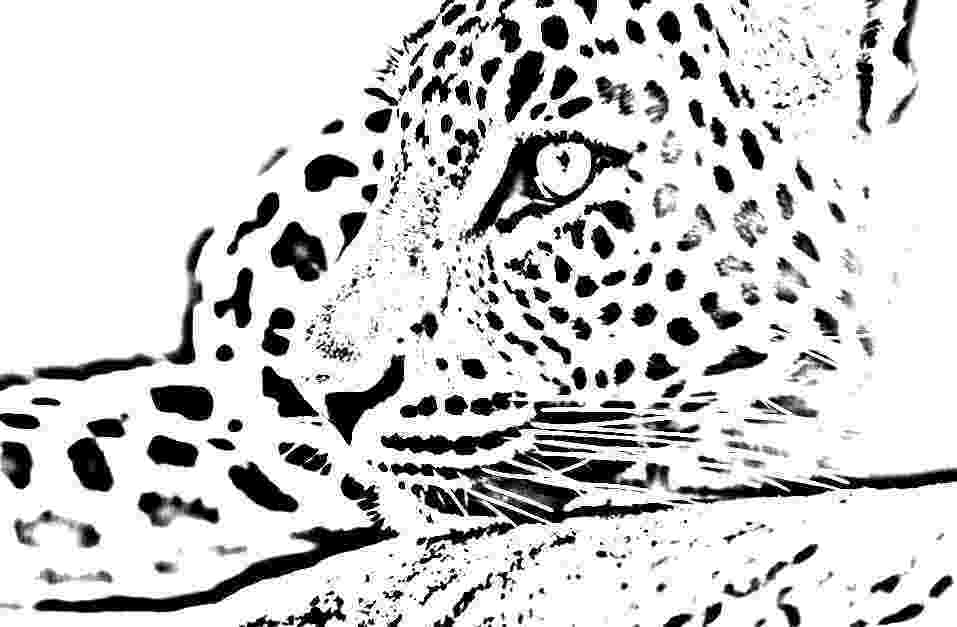 pictures of leopards to print lurking leopard coloring page to pictures of leopards print