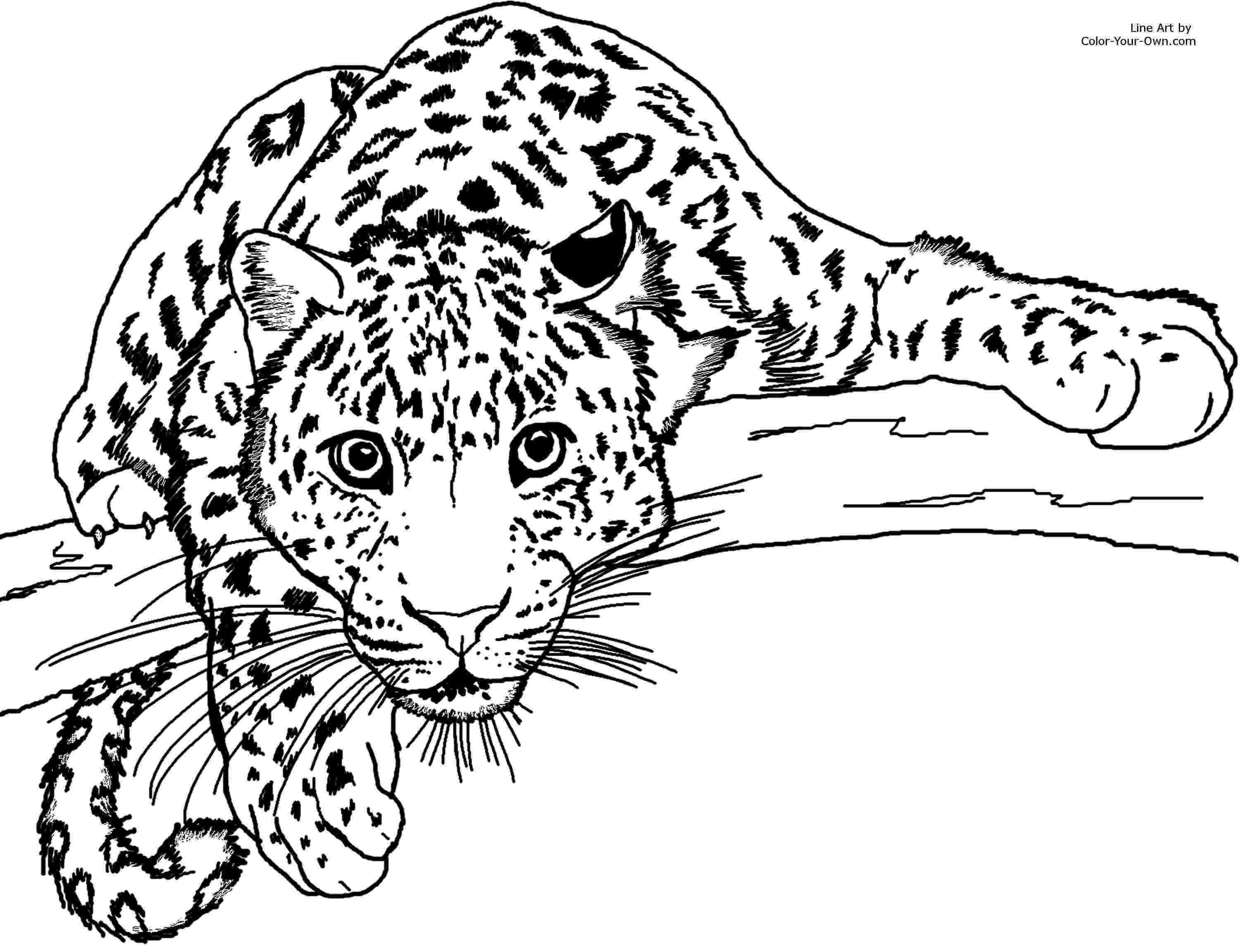 pictures of leopards to print printable cheetah coloring pages for kids cool2bkids print to leopards of pictures