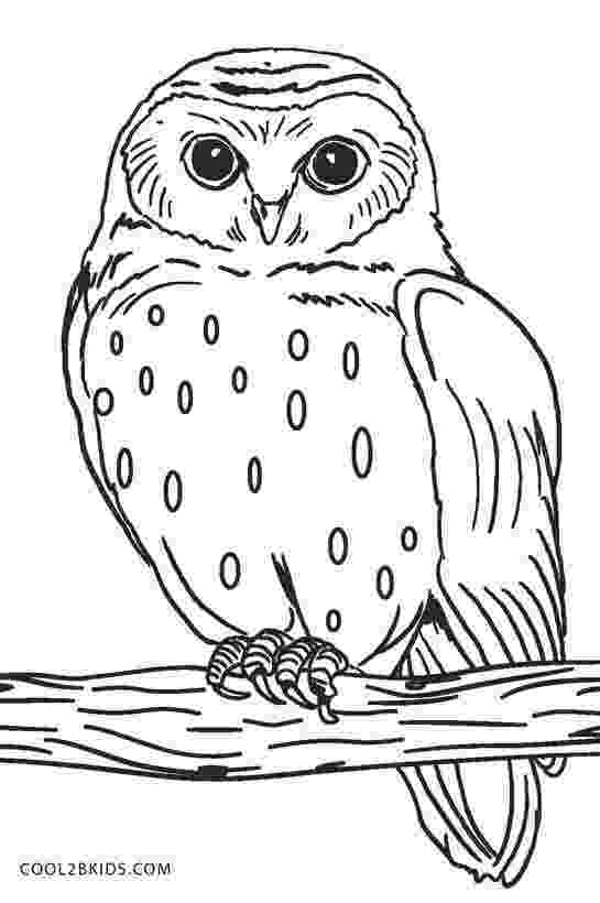 pictures of owls to color free printable owl coloring pages for kids cool2bkids color pictures owls of to