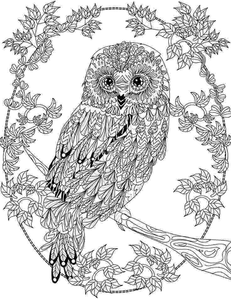 pictures of owls to color owl with rose coloring page free printable coloring pages pictures owls of color to