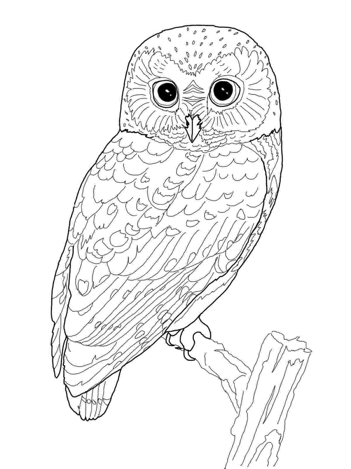 pictures of owls to print owl coloring pages for adults free detailed owl coloring to pictures print of owls