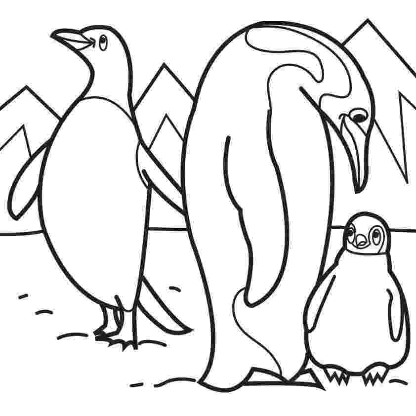 pictures of penguins to colour coloring pages january 2011 penguins of pictures colour to