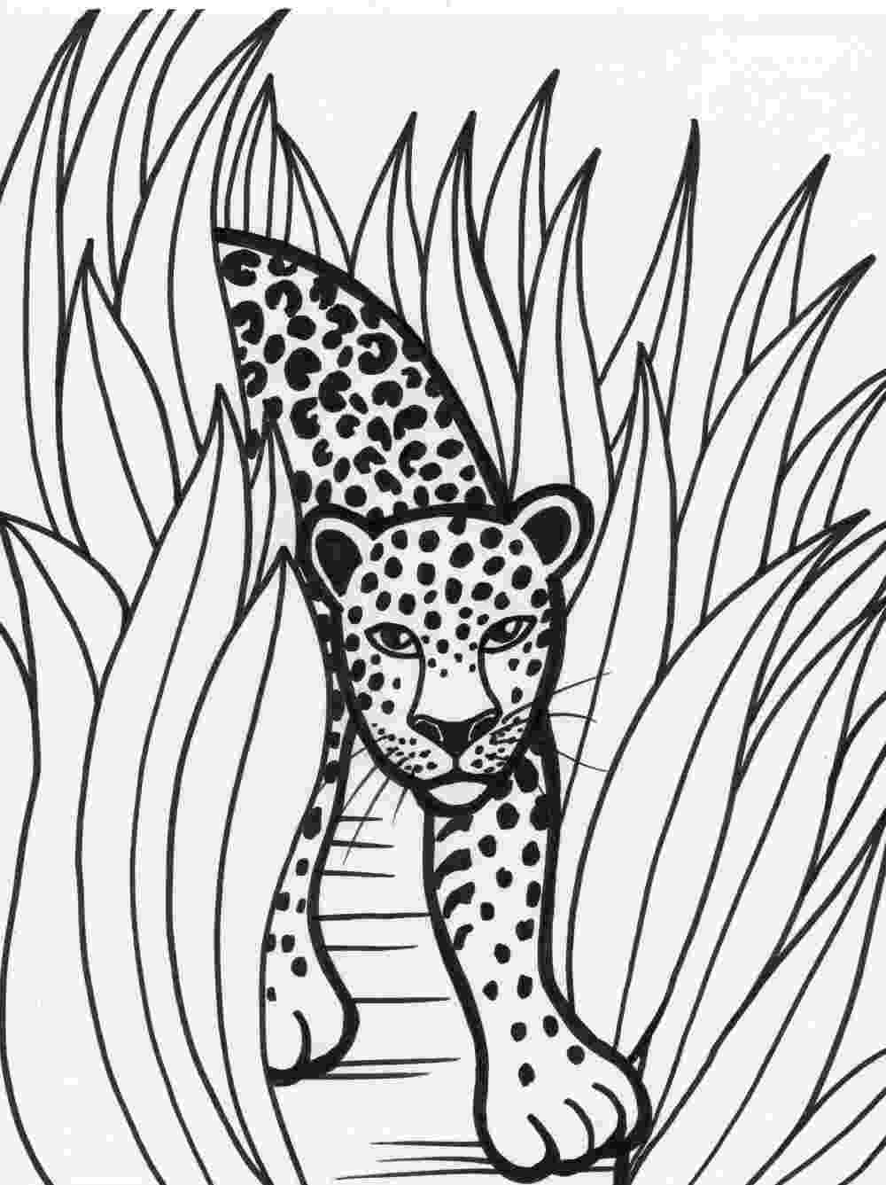 pictures of rainforest animals to color free printable rainforest coloring pages coloring home rainforest of pictures color animals to