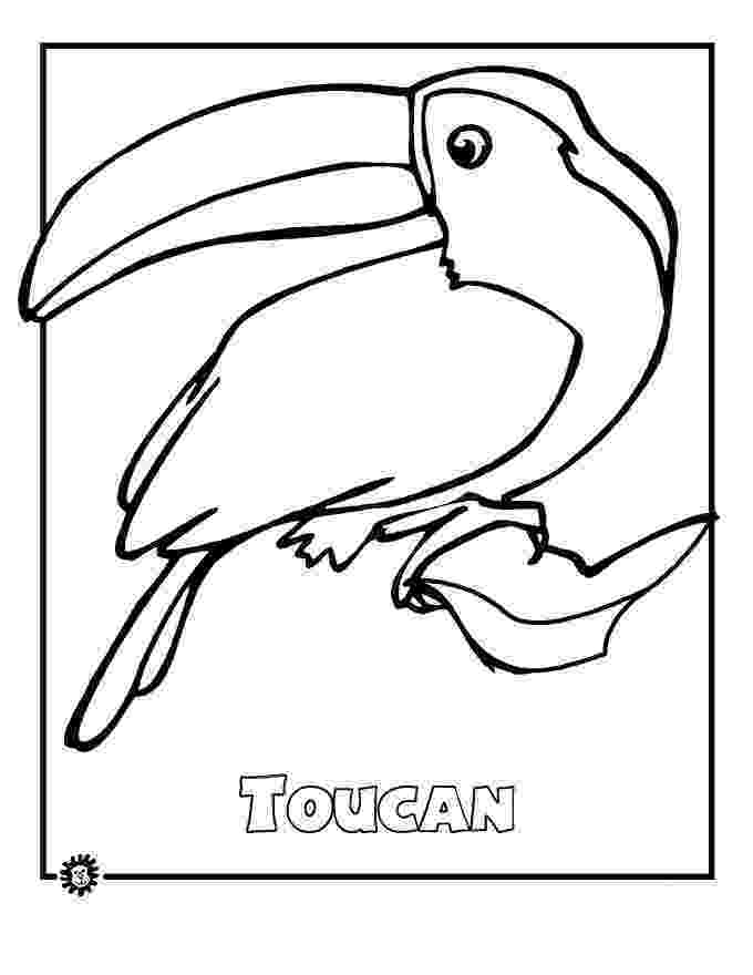 pictures of rainforest animals to color fun page for kids bring back the green of animals pictures to color rainforest