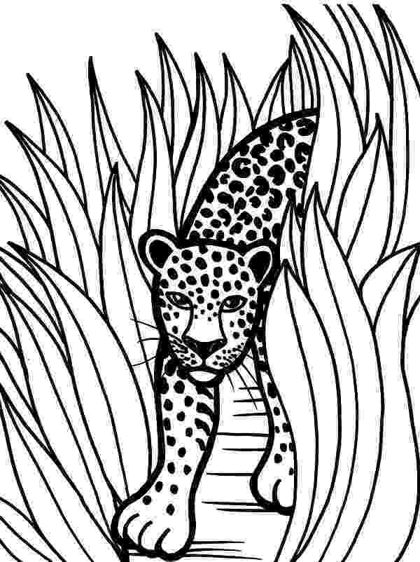 pictures of rainforest animals to color rainforest coloring page snake coloring pages animal animals to color of rainforest pictures