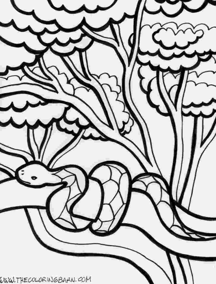 pictures of rainforest animals to color simple tropical rainforest coloring page coloring pages to pictures color animals of rainforest