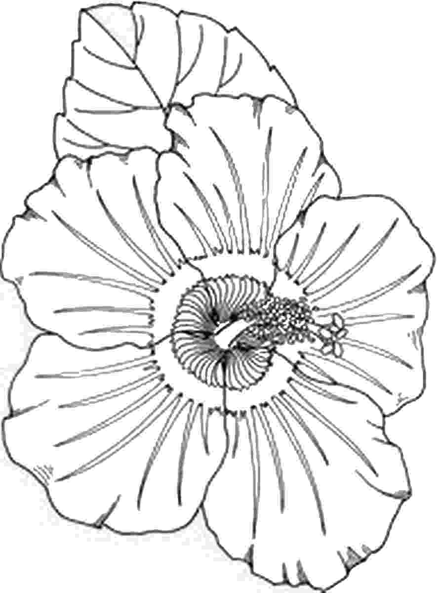 pictures to print free printable turkey coloring pages for kids cool2bkids to pictures print