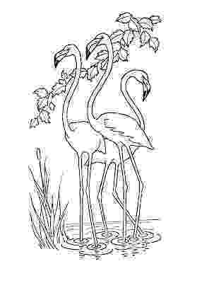 pictures to print kids printable flamingo coloring page the graphics fairy to print pictures