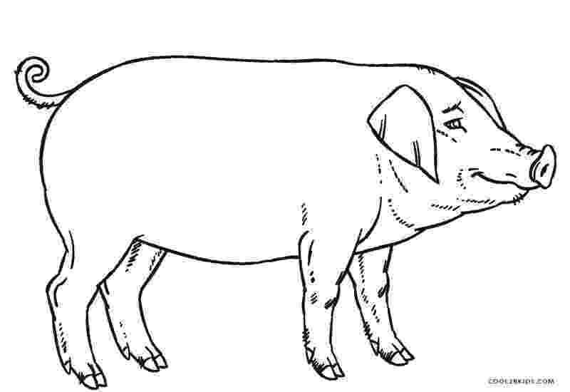 pig printable free printable pig coloring pages for kids printable pig