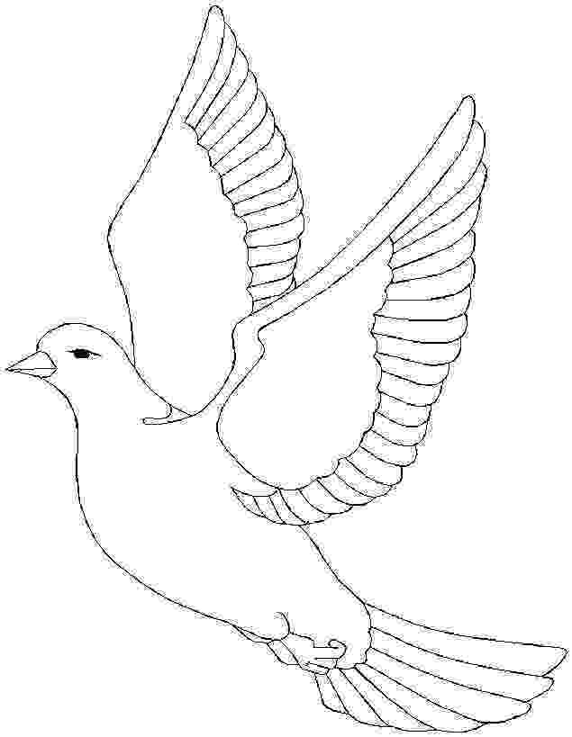 pigeon coloring sheet bird pigeon coloring page sheet coloring pigeon
