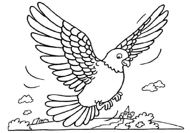 pigeon coloring sheet free printable pigeon coloring pages for kids pigeon sheet coloring
