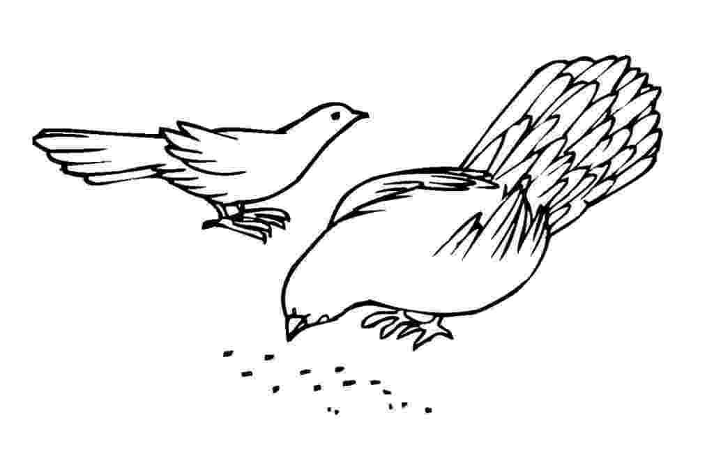 pigeon coloring sheet free printable pigeon coloring pages for kids sheet pigeon coloring