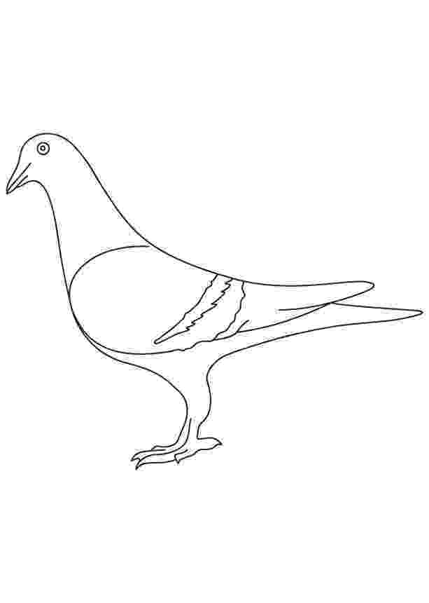 pigeon coloring sheet mo willems pigeon coloring page sketch coloring page pigeon coloring sheet