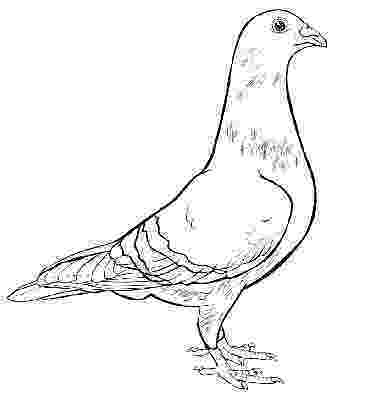 pigeon coloring sheet pigeon coloring pages kidsuki pigeon coloring sheet