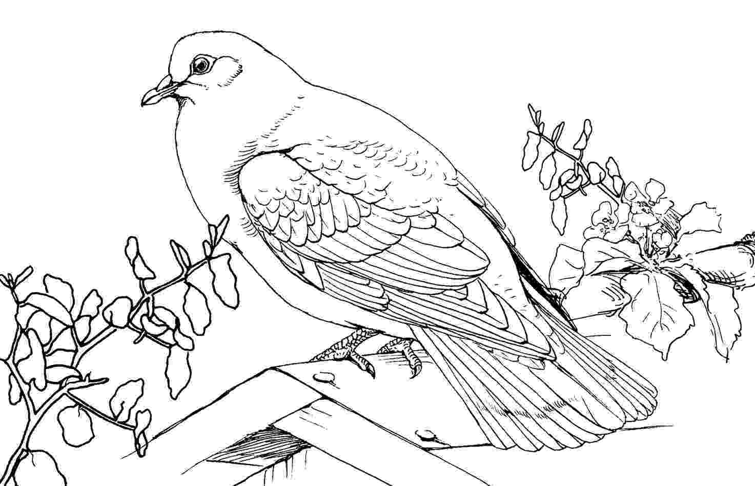 pigeon coloring sheet rock pigeon coloring page free printable coloring pages sheet pigeon coloring