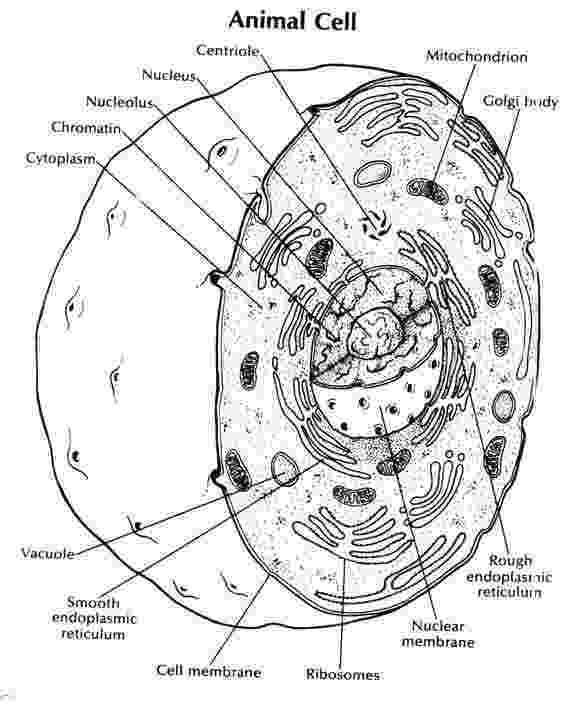 plant cell coloring page biology coloring pages worksheets asu ask a biologist page plant coloring cell