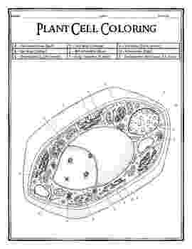 plant cell coloring page plant cell diagram worksheet homeschooldressagecom page cell coloring plant