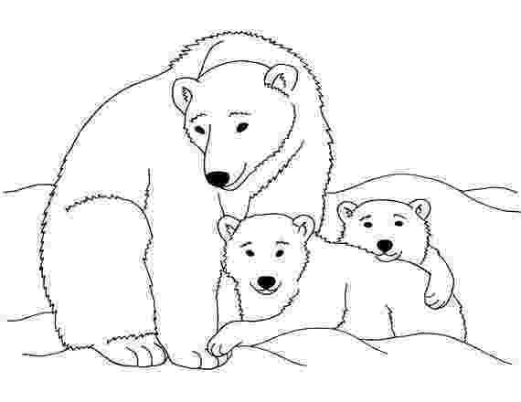 polar bear pictures to colour polar bears pictures to colour polar bear