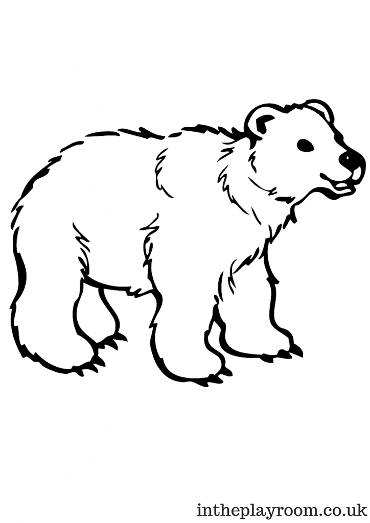 polar bear pictures to colour side face grizzly bear coloring pages bear polar pictures to colour