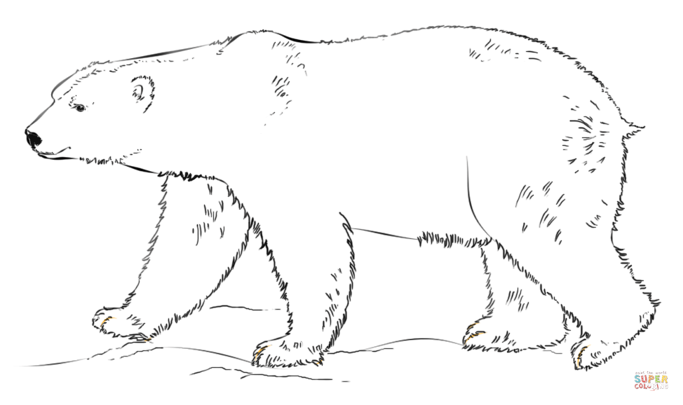 polar bear pictures to print free printable polar bear coloring pages for kids to pictures bear polar print