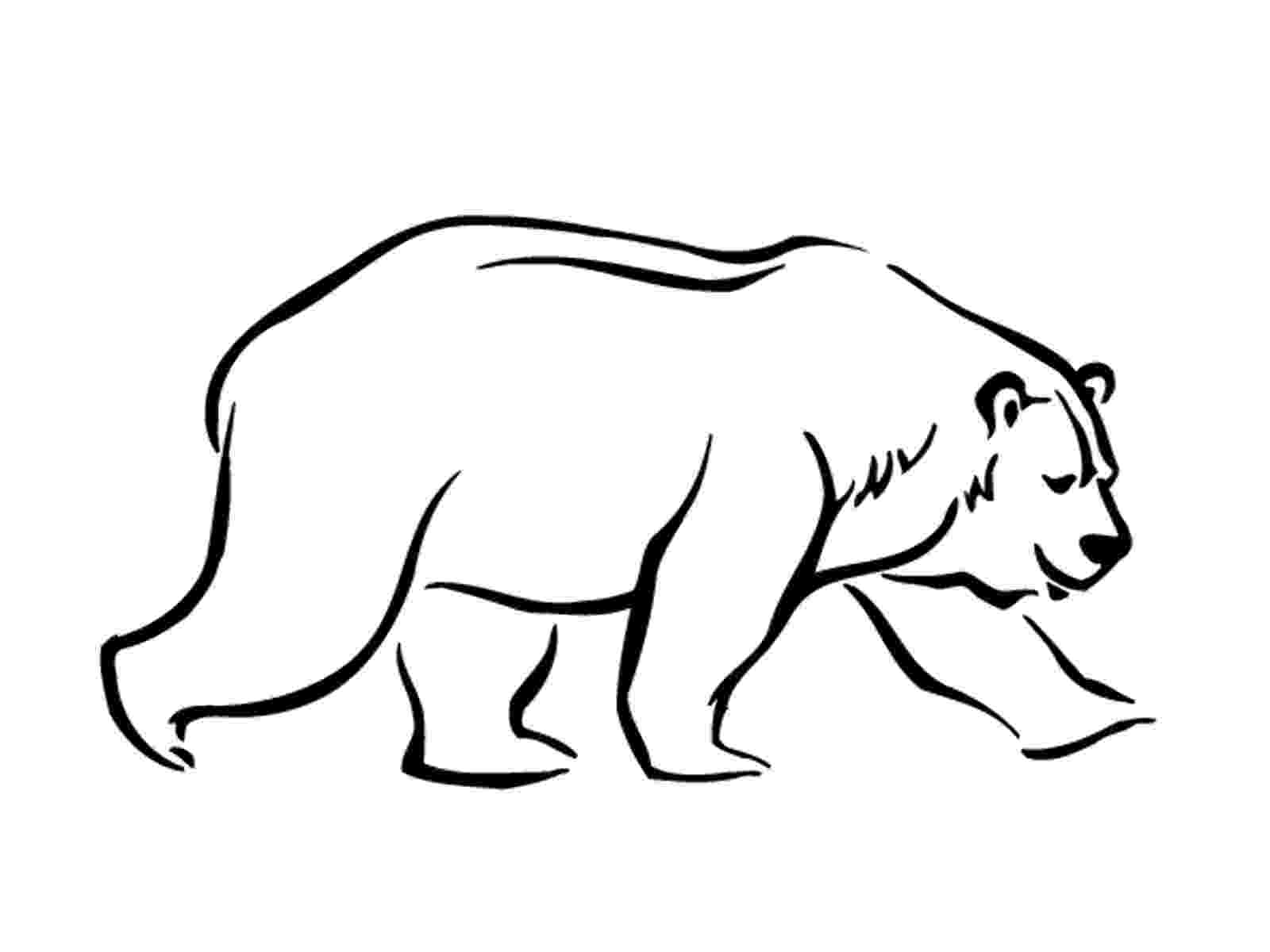 polar bear pictures to print free printable polar bear coloring pages for kids to print bear polar pictures
