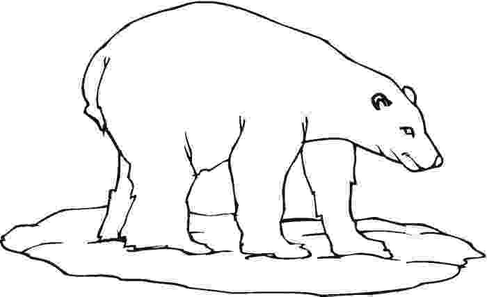 polar bear pictures to print polar bear coloring pages to download and print for free polar pictures to bear print