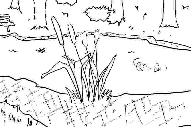 pond coloring page 129 cattails a daily doodle page pond coloring
