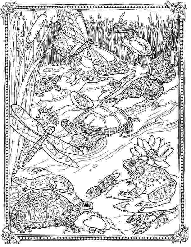 pond coloring page lilypad pond coloring pond page