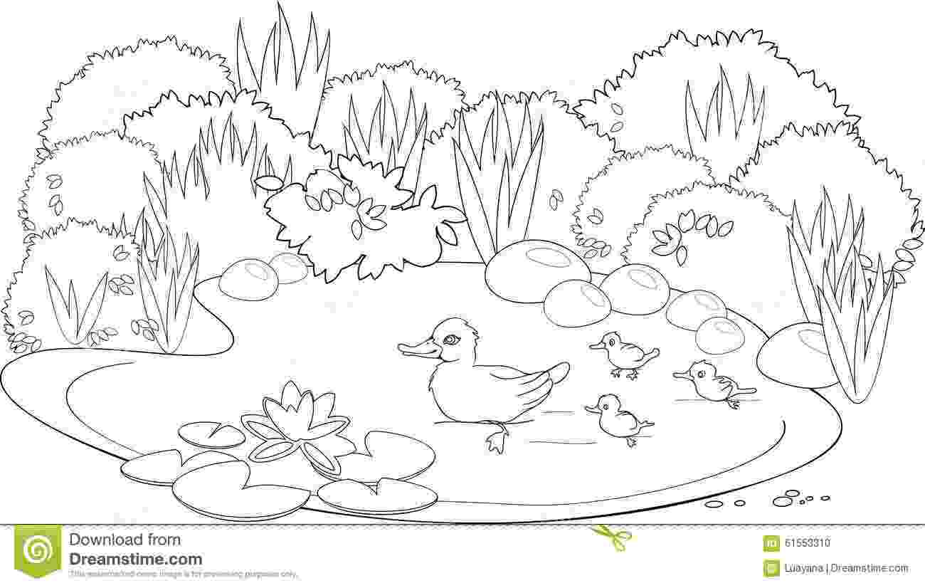 pond coloring page pond coloring pages printable sketch coloring page page coloring pond