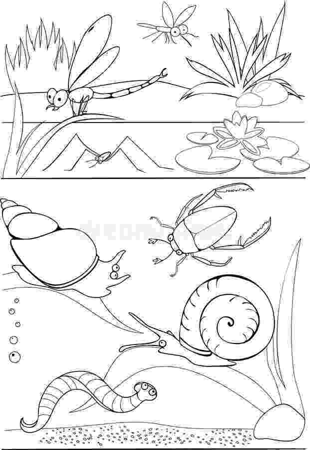 pond pictures to color ducks swimming in the pond coloring page stock color pond pictures to