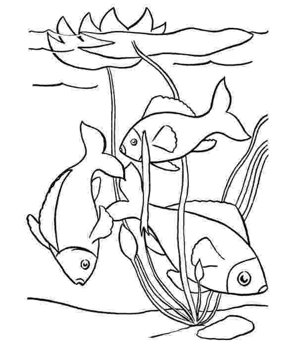 pond pictures to color pond drawing at getdrawings free download to pictures color pond
