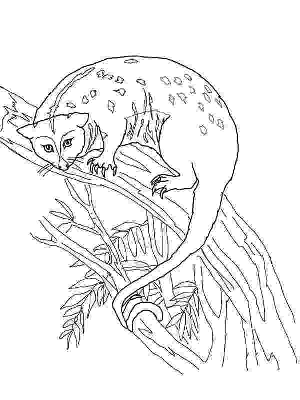 possum colouring pages hanging possum coloring page color luna pages possum colouring