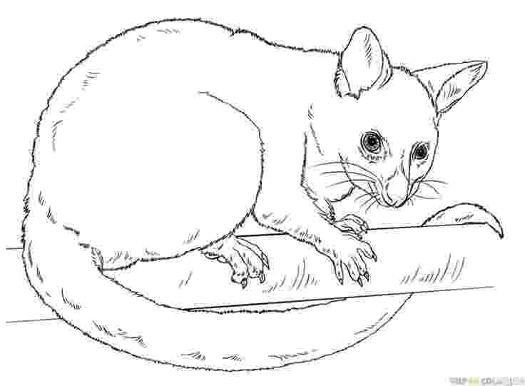 possum colouring pages possum coloring page coloringcrewcom colouring pages possum