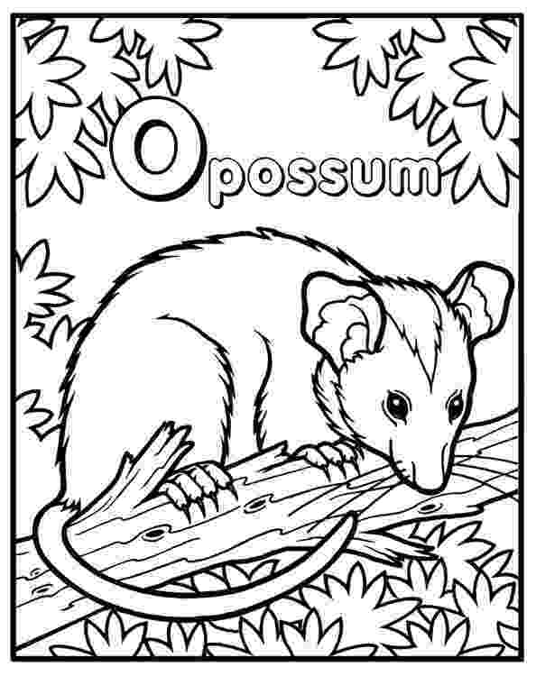 possum colouring pages possum coloring page phish shirts book crafts pages colouring possum