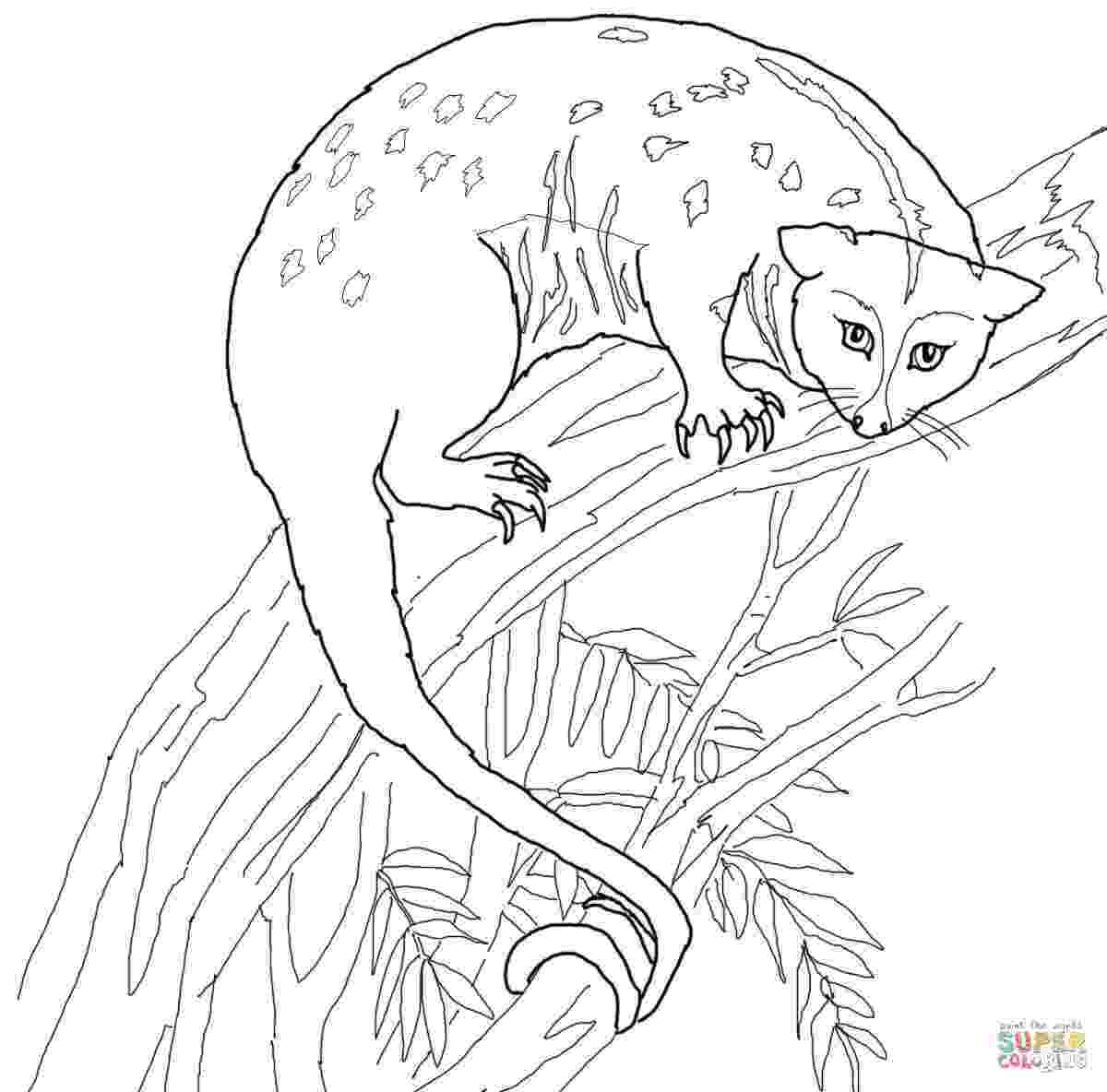 possum colouring pages possum coloring pages getcoloringpagescom possum pages colouring