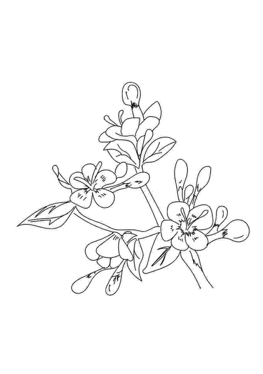pretty flowers coloring pages pretty flower drawing at getdrawingscom free for coloring flowers pages pretty