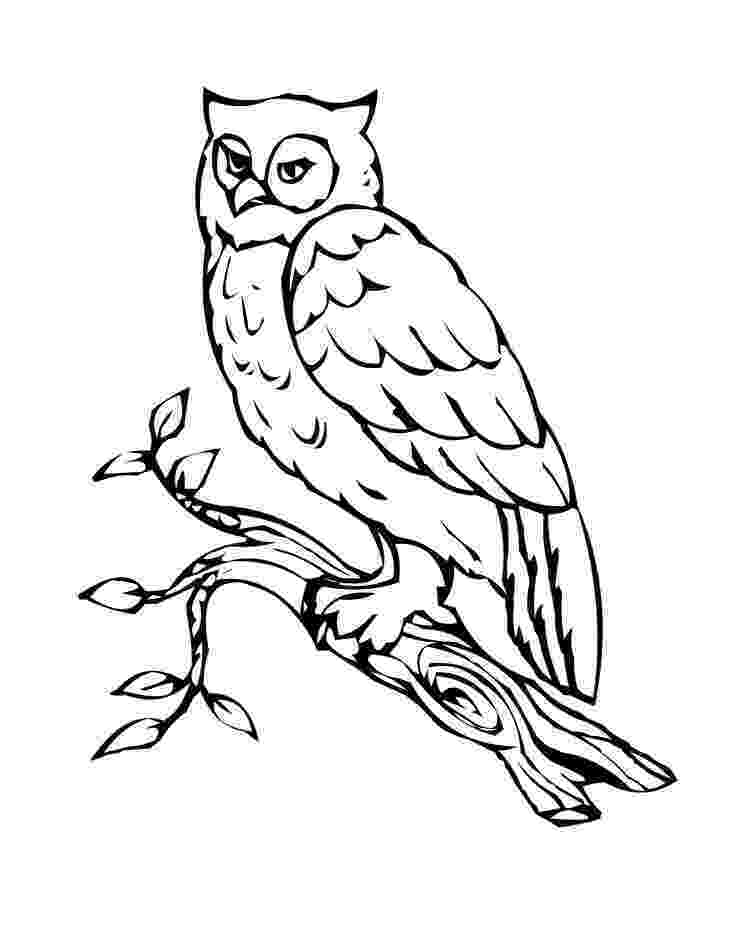 print owl pictures free printable owl coloring pages for kids owl coloring owl pictures print