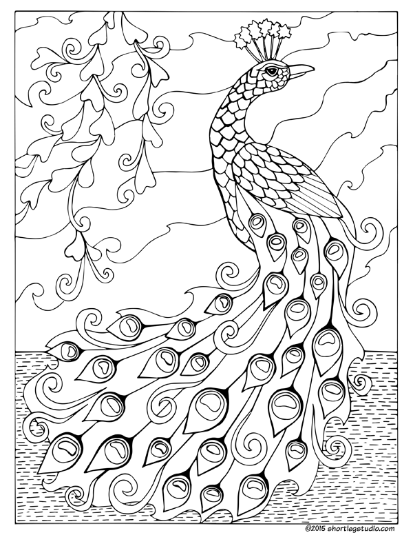 printable coloring pages peacock printable peacock coloring pages for kids cool2bkids coloring printable peacock pages
