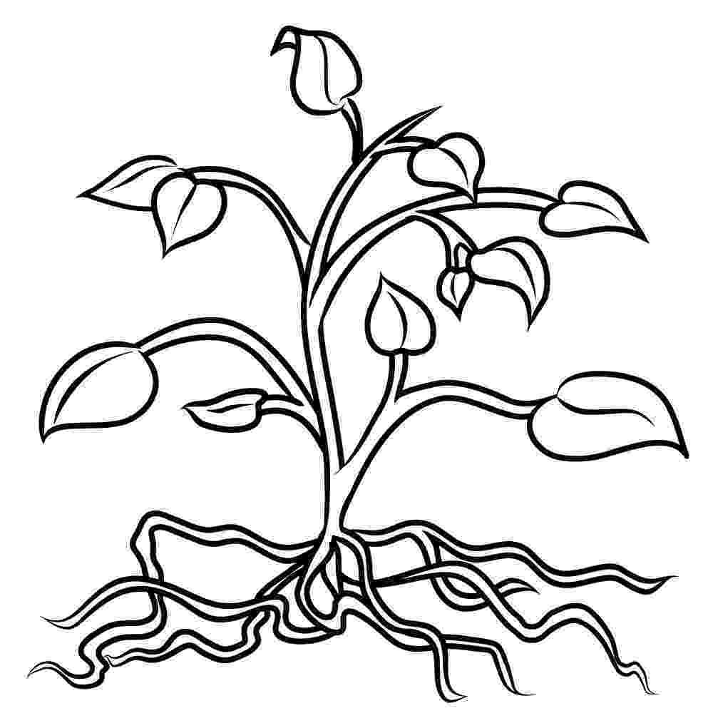 printable coloring pages plants free printable flower coloring pages for kids best pages plants printable coloring
