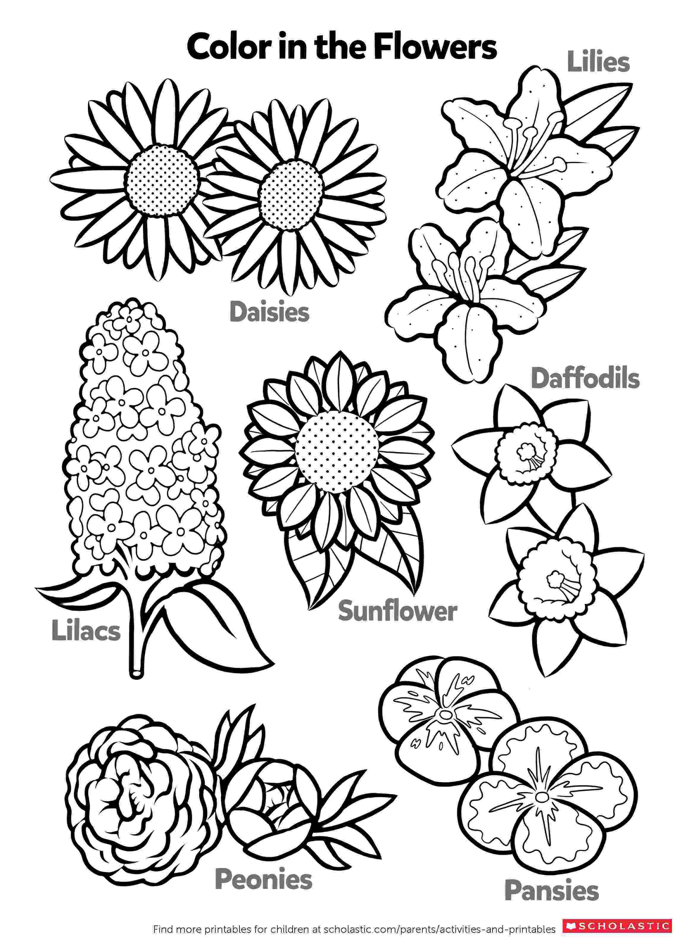 printable coloring pages plants learn about flowers by coloring worksheets printables coloring plants printable pages