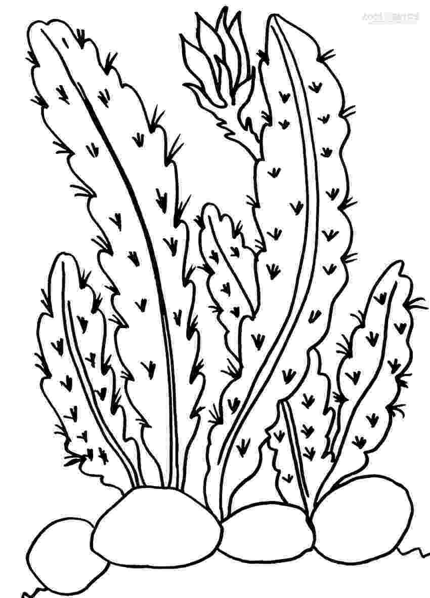 printable coloring pages plants printable cactus coloring pages for kids cool2bkids printable plants coloring pages