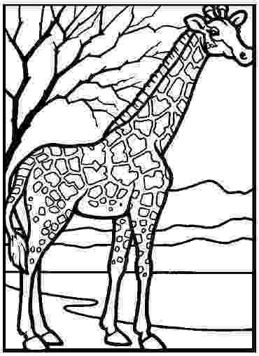 printable coloring zoo animals printable zoo coloring pages coloringmecom animals printable coloring zoo