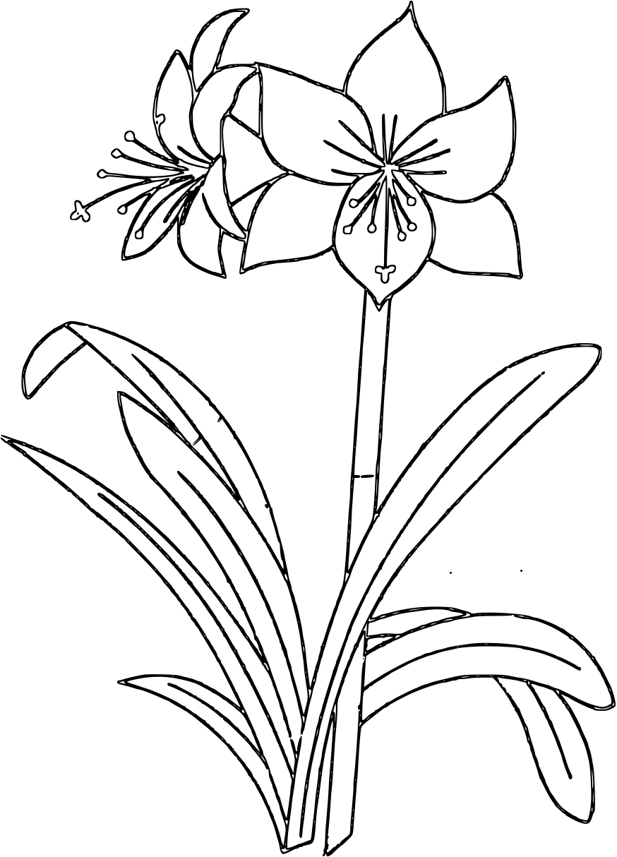 printable colouring flower pages flower coloring pages pages printable colouring flower