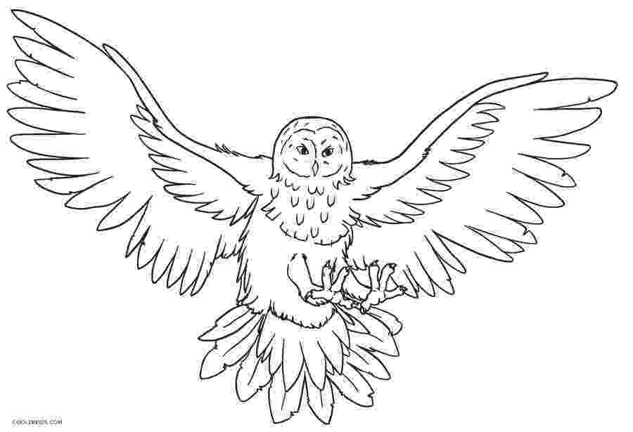 printable owl colouring printable coloring pages for adults 15 free designs printable colouring owl