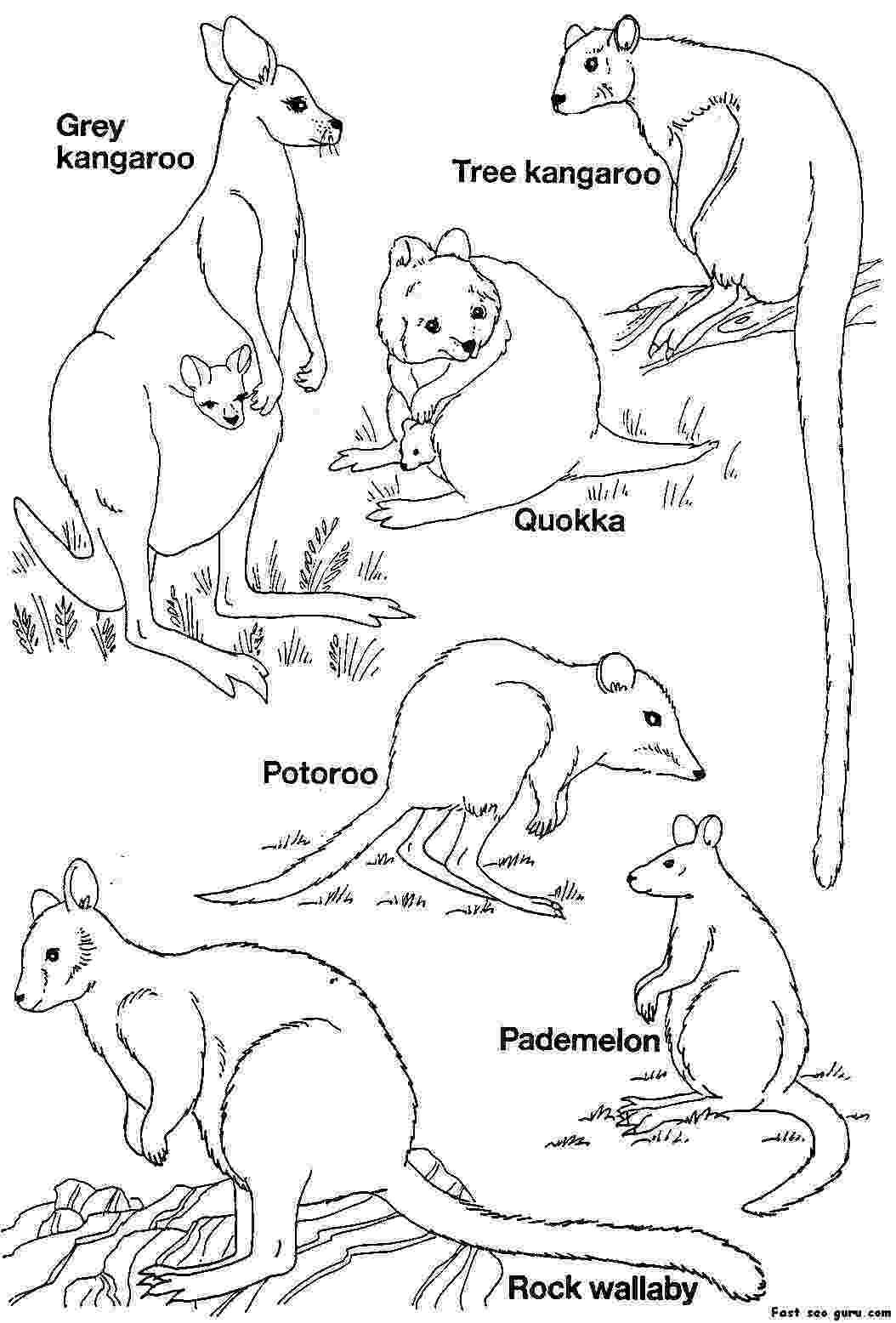 printable pictures of australia australian colour in printables google search girl pictures printable of australia
