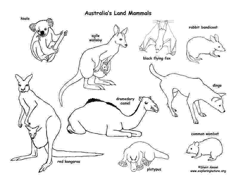 printable pictures of australia cornelius wants to go scuba diving and to the outback in pictures of printable australia
